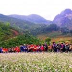Mua Hoa Tam Giac Mach Ha-Giang